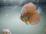 User:  andrea alampi