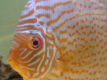 discus 21 03 062 by andrea alampi