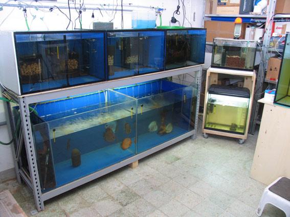 Allevamento amatoriale di rosario curcio for Vasche per allevamento ittico