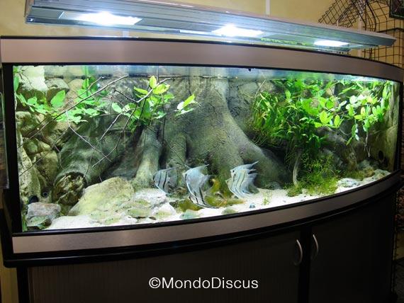 Acquario fascino ed emozione tra 5 vetri for Piante per acquario online