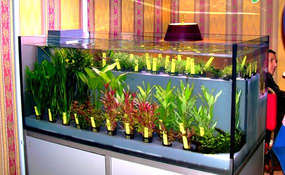 vendita piante acquario