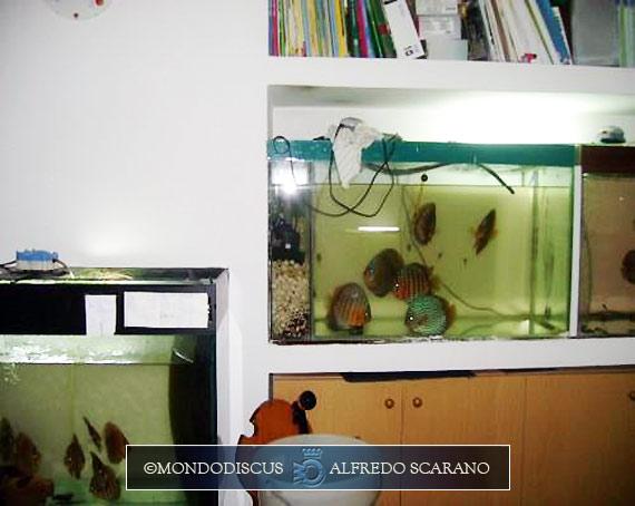 Acquario discus i cambi con acqua di rubinetto for Acquario 250 litri