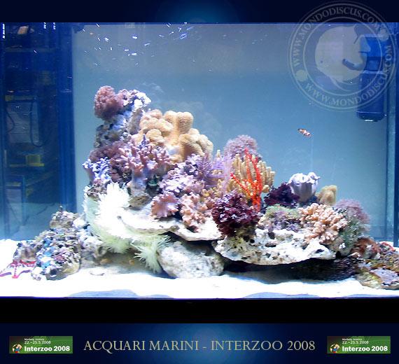 gli acquari marini