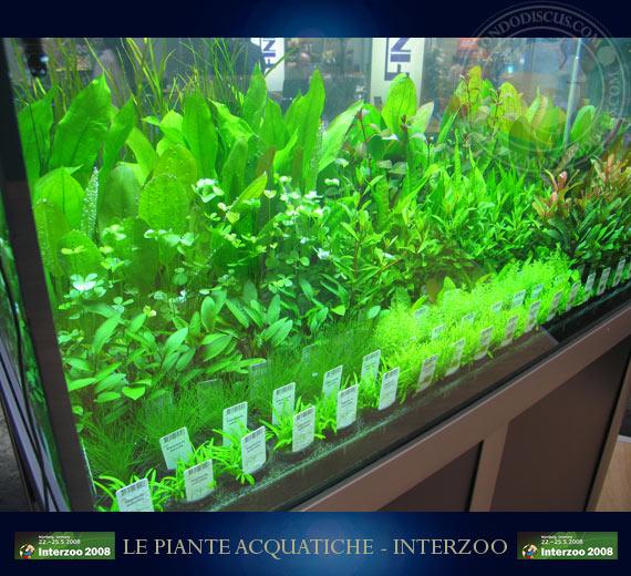 Piante per acquario vendita new line carpet anubias for Vendita on line acquari