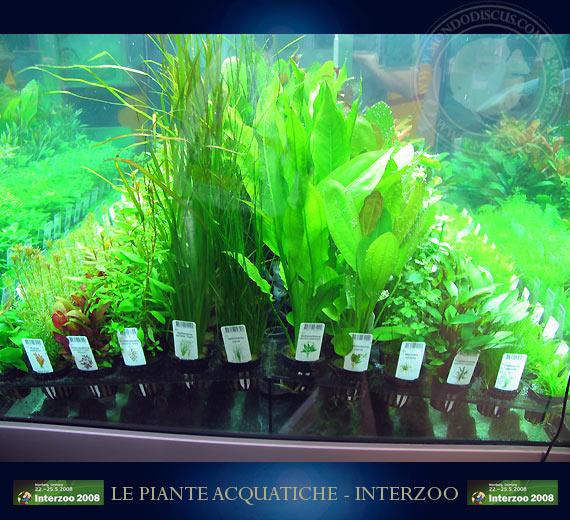 Piante Alte Acquario : Le piante acquatiche