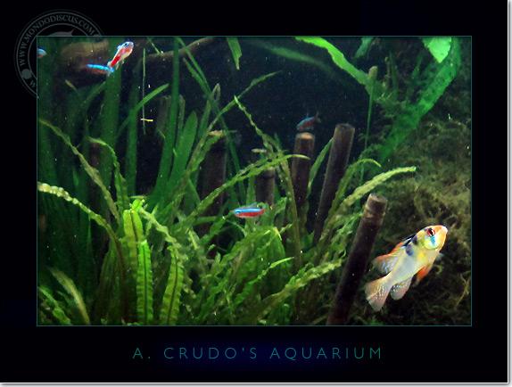 Discus_Tank_aquarium