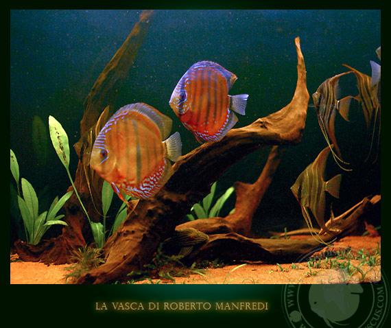 Acquari Italiani Wild Discus E Angel Fish