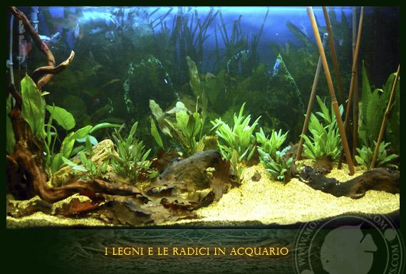 I legni e le radici nell 39 allestimento di un acquario for Legni per acquario