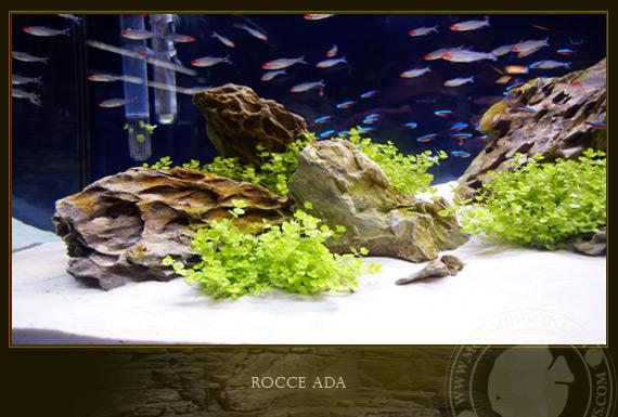 Rocce ada for Legni per acquario