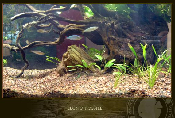 Il legno fossile for Legni per acquario