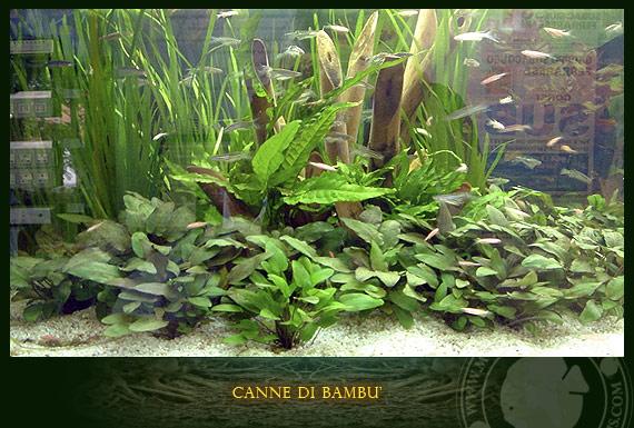 Il legno di bambu for Legni per acquario