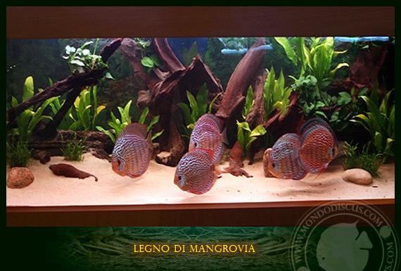 Legno e radici di mangrovia for Legni per acquario