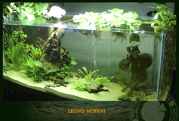 Legno mopani for Legni per acquario