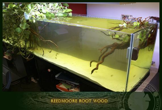 Reedmoore root wood for Legni per acquario
