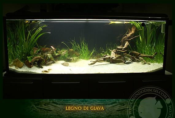 Radici di giava e sumatra for Legni per acquario