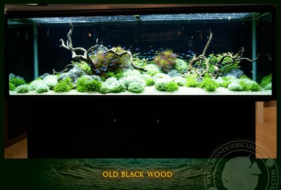 Old black wood for Legni per acquario
