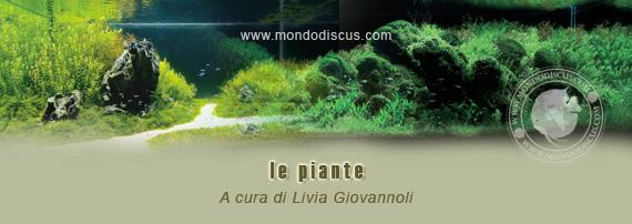 Mondo acquario le piante in acquario for Piante per acquario online