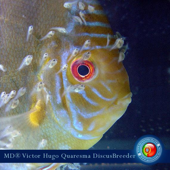 NEW: Vitor Hugo Quaresma su MondoDiscus