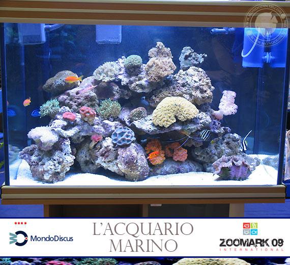 Zoomark2009 acquari marini for Acquari marini offerte