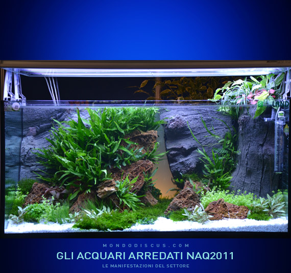 Vasca Aquaristica By Fabio Lorusso