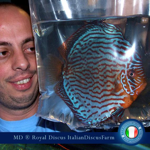 Intervista The Royal Discus Milano