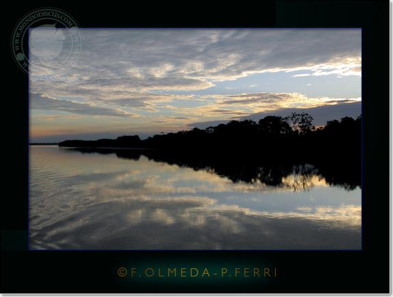 perù, amazzonia, foresta, deserto, delfino