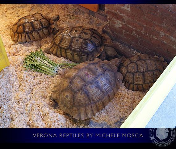 Verona reptiles rane insetti e tartarughe for Tartaruga prezzo