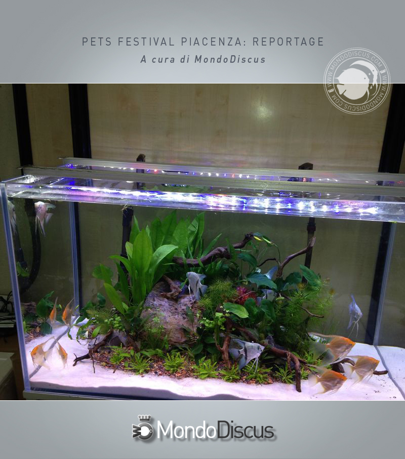 Pets Festival -Piacenza: il reportage