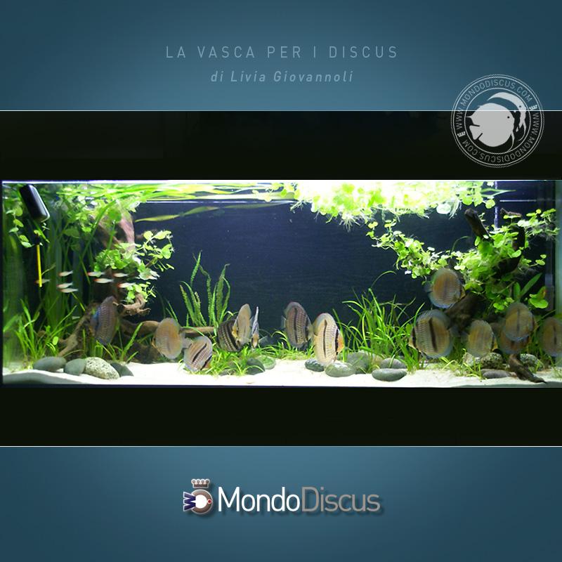 AquarioDiscus2