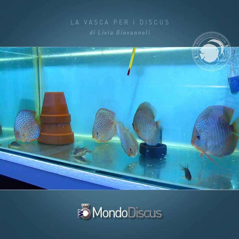 L 39 acquario per i discus for Fondo per acquario