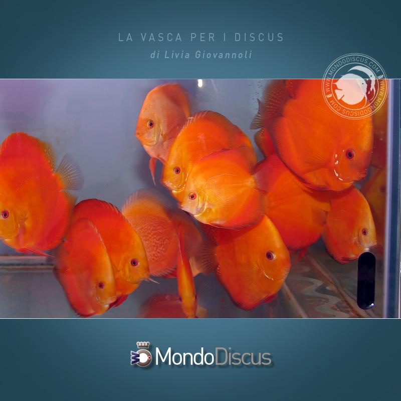 L 39 acquario per i discus for Vasca per pesci