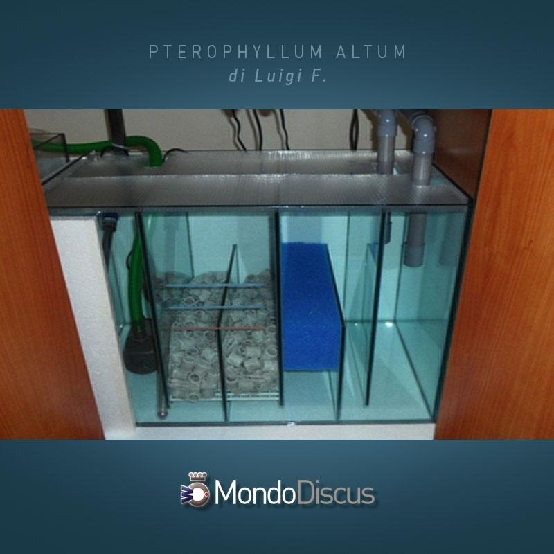 MasterArticoli-PterophyllumAltum5