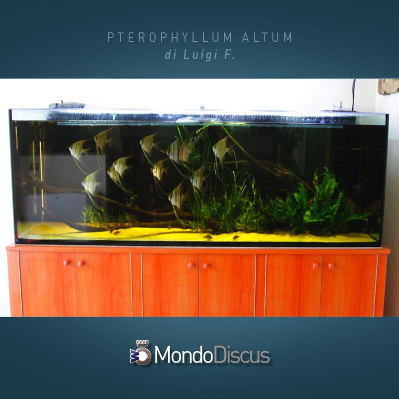 MasterArticoli-PterophyllumAltum9