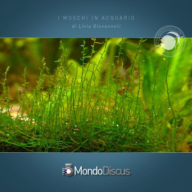 stringy-moss