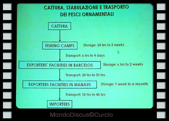 stabulazione e tempi di pesca