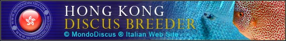 discus world breeder  Hong Kong