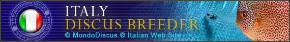 discus world breeder Italy