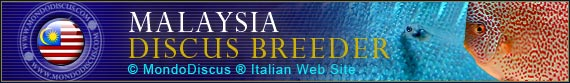 discus world breeder malesia