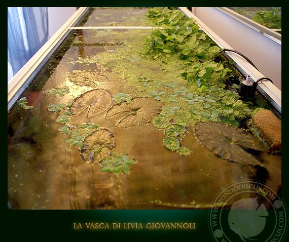 Aquarium amazonia tank
