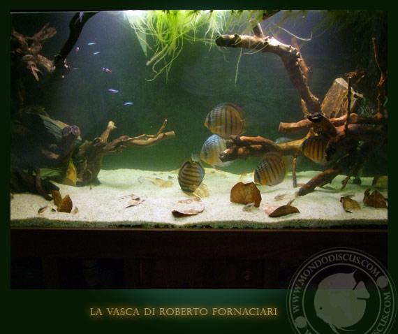 green tefè acquarium