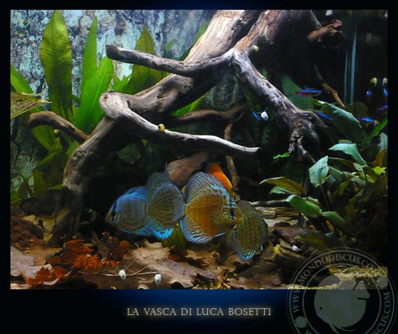 la vasca di Luca Bosetti