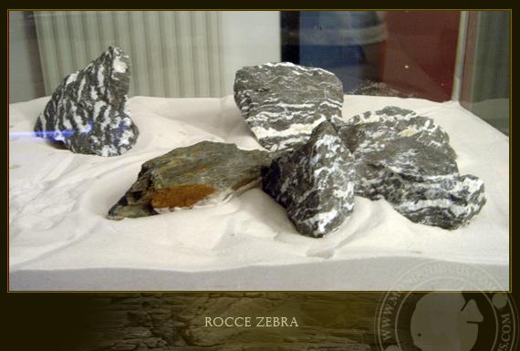 rocce zebra