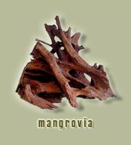 legno di mangrovia