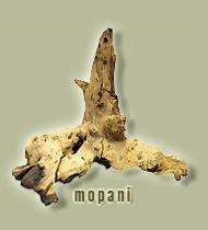 radice di mopani