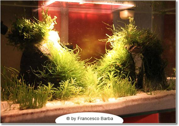 Il caridinaio di Francesco Barba