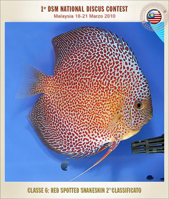 2nd Place-Color Fish (M) Sdn Bhd.