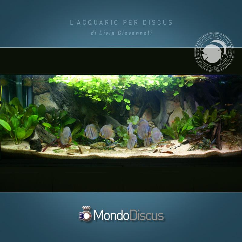 AquarioDiscus1