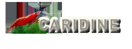 Caridine