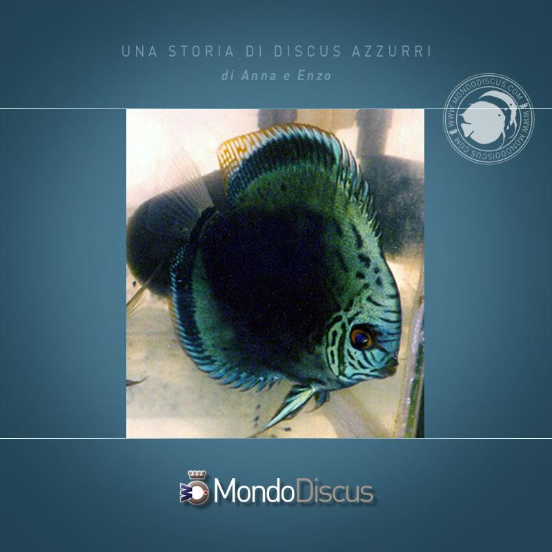 DiscusAzzurri2
