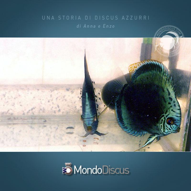DiscusAzzurri3